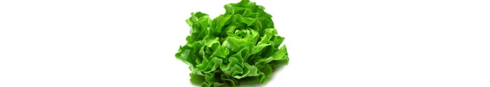 Test sur les variétés de salade