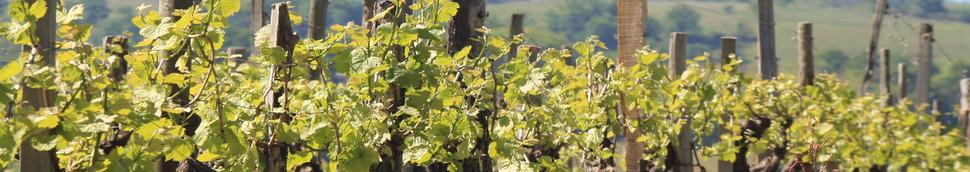 Test de connaissance sur les vins du Sud-Ouest