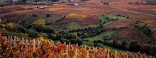 Domaine des vignes du Paradis Saint-Amour