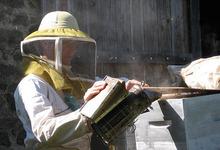 apiculture miel