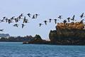 Bréhat dans les Côtes d'Armor, un site exceptionnel pour la pureté de ses eaux, une richesses en algues inégalée