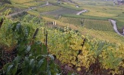 Conserver les vins d'Alsace