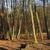 La forêt de Rambouillet