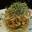 Salade de chou Coleslaw