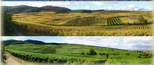 André Stentz, vins d'Alsace en bio depuis 1984