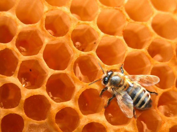 Le parcours parfait des abeilles