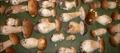 Pâté de champignons en croûte de cèpes secs, suée d'épinards, vinaigrette à l'encre de seiche