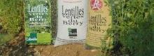 Cassolette de Lentilles vertes du berry aux confits