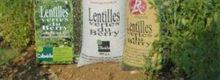 Tuiles à la farine de lentilles vertes
