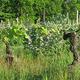 vigne agriculture biologique