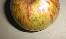 Quiche au boudin et aux pommes d'Ile-de-France