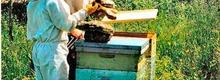 La grange aux abeilles