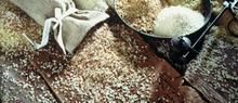 Bouchée de Courge au Riz de Camargue et à la Menthe