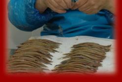 Zone de production de l'anchois de Collioure
