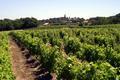 un paysage de vigne dans le Frontonnais