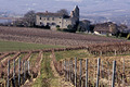 un paysage de vigne du Gaillacois