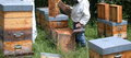 apiculture