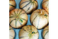 Le melon charentais