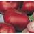 L'oignon rouge pâle de niort