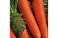 La carotte de meaux