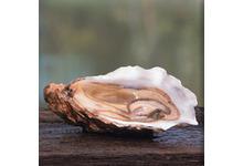 L'huître de bretagne