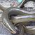L'anguille d'alsace