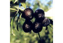 L'olive noire de nyons