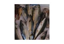poissons bleus