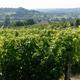 vignoble des Côtes de Duras
