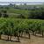 Vignoble des Côtes de Blaye et estuaire de la Gironde
