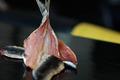 Sachet Sardines bretonnes fumées 250g