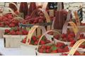 La fraise de Carpentras