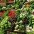 légumes des hortillonnages