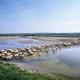 agneaux de pré salé de la baie de Somme