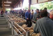 Marché ovins d'Assier