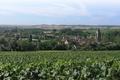 Vignoble de Villenauxe-la-Grande