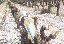 Vin blanc AOC Minervois - Cuve Abricotine