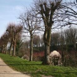 esplanade du château de Dammartin-en-Goele