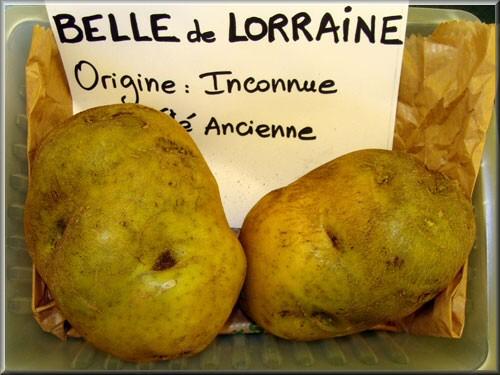La pomme de terre de lorraine - Variete de pomme de terre ancienne ...