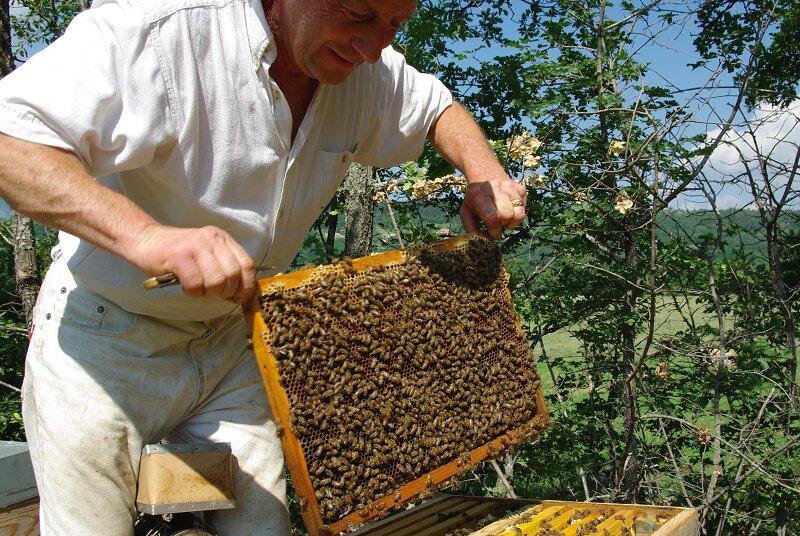 apiculteur gap