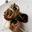 AMANCAYA  Et ses roulés de canard, sauce à la prune rouge