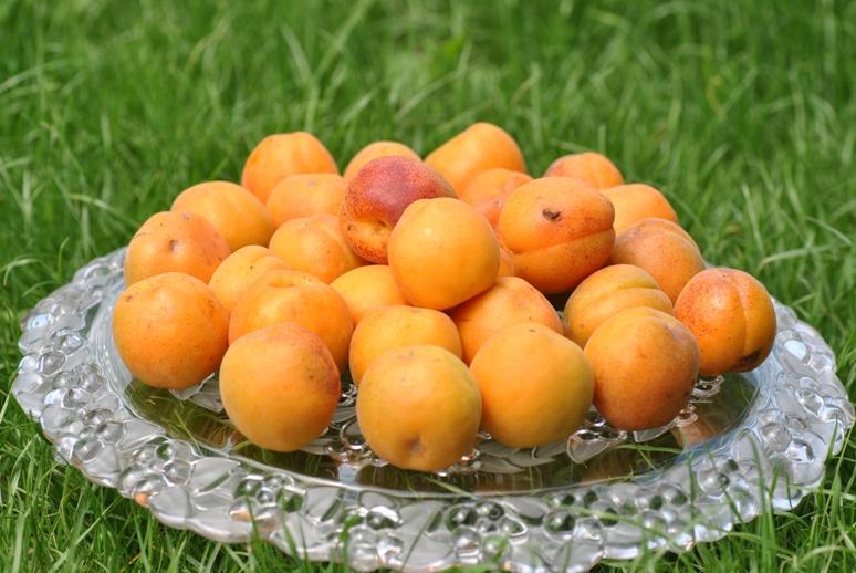 abricot-peche-de-nancy22