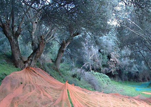 La maison de l 39 huile d 39 olive patrick bartoli producteur - La maison de l olive nice ...
