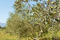 Domaine De L'arbre Blanc