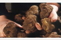 Truffes Pebeyre