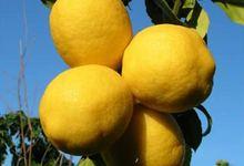citron de Corse