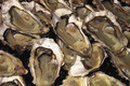 huîtres de Diana et Urbino