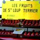Les fruits de Saint Loup terrier