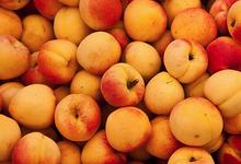 Abricots à la Crème
