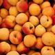 Médaillons de Veau aux Abricots et Curry, Polenta aux Poivrons